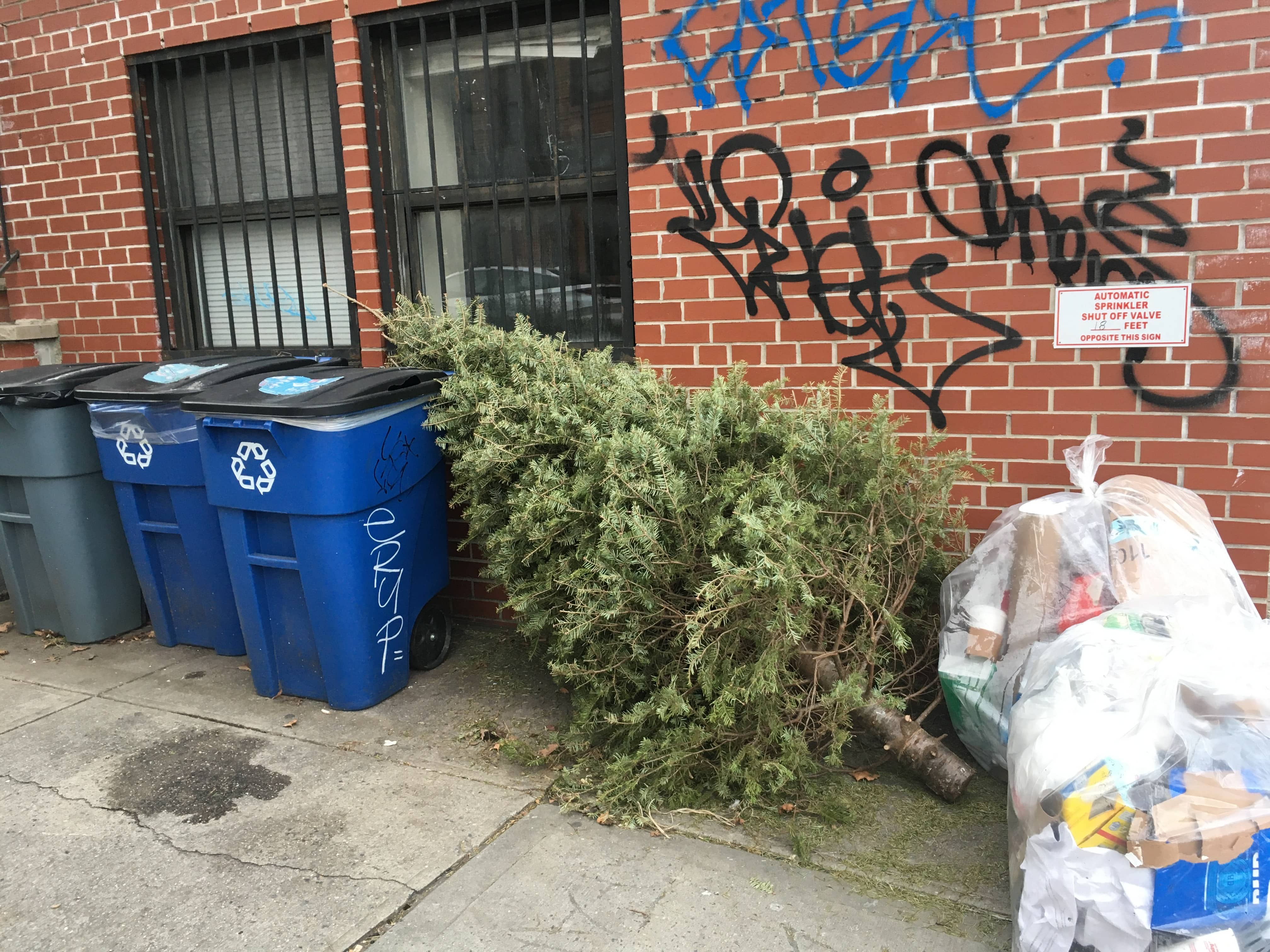 2020 Dispise Of Christmas Tree Mulchfest 2020: Here's How to Dispose of that Christmas Tree   BKLYNER